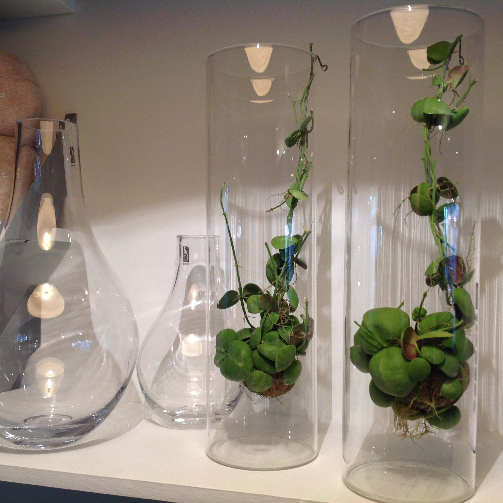 plantes en pot d 39 int rieur tentez l 39 originalit avec. Black Bedroom Furniture Sets. Home Design Ideas