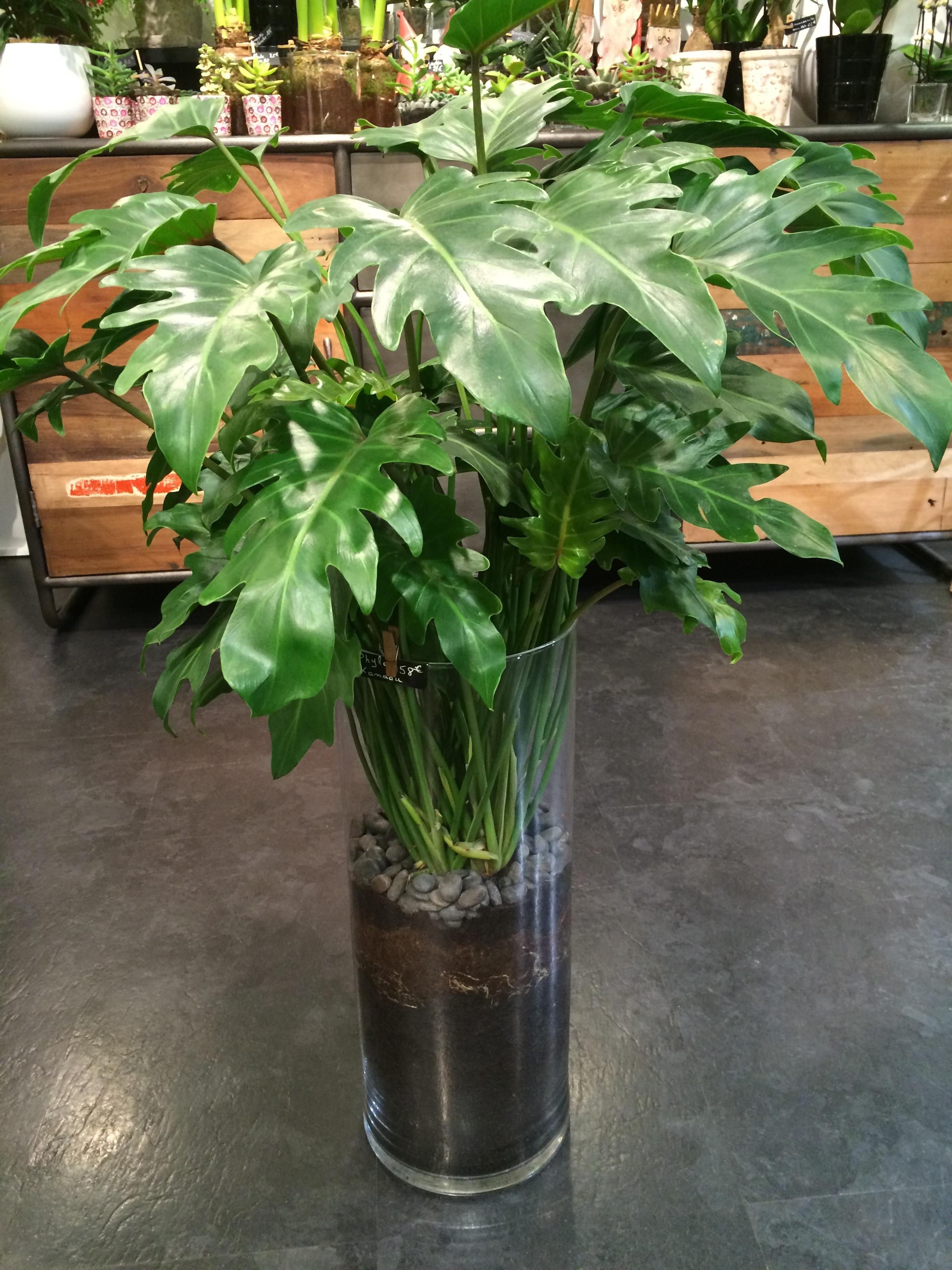 Arbre Fruitier En Pot Interieur plantes en pot d'intérieur : tentez l'originalité avec fleurodet