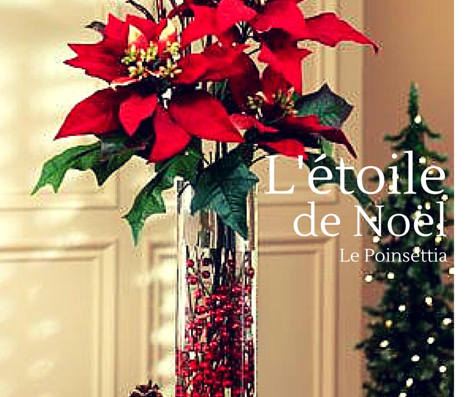 Image Fleur Noel.La Fleur De Noel Ou Etoile Rouge Le Poinsettia