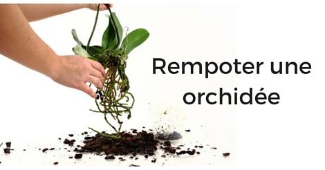 Rempoter Une Orchidee Techniques Et Conseils