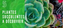5 plantes grasses et succulentes à découvrir