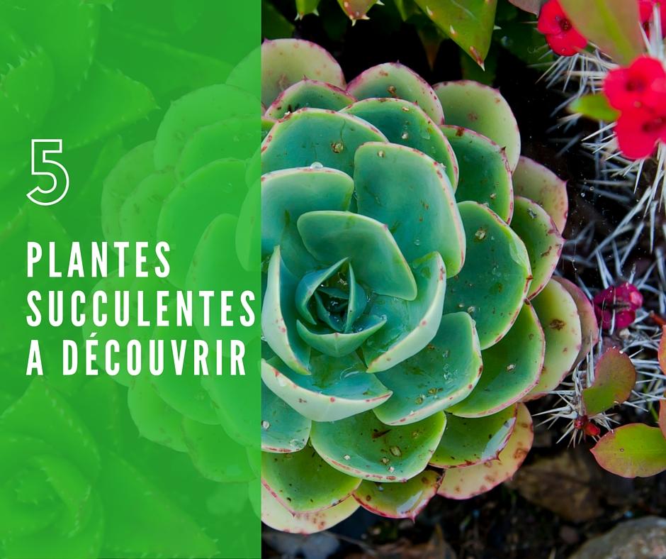 5 plantes grasses d couvrir crassula sedum haworthia. Black Bedroom Furniture Sets. Home Design Ideas
