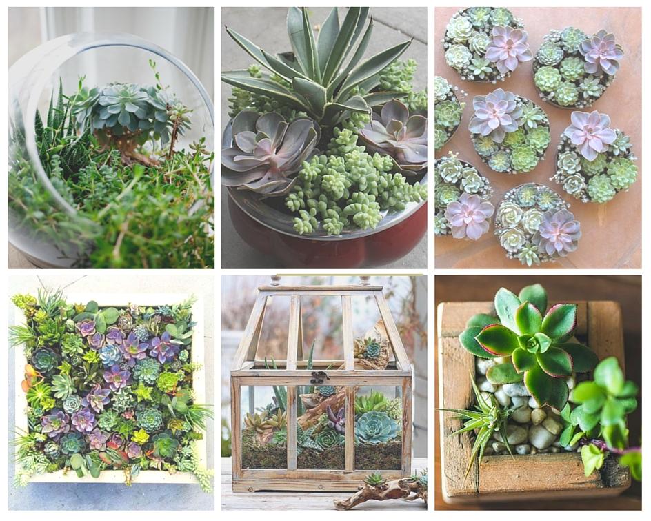 idée mini jardin avec plantes grasses