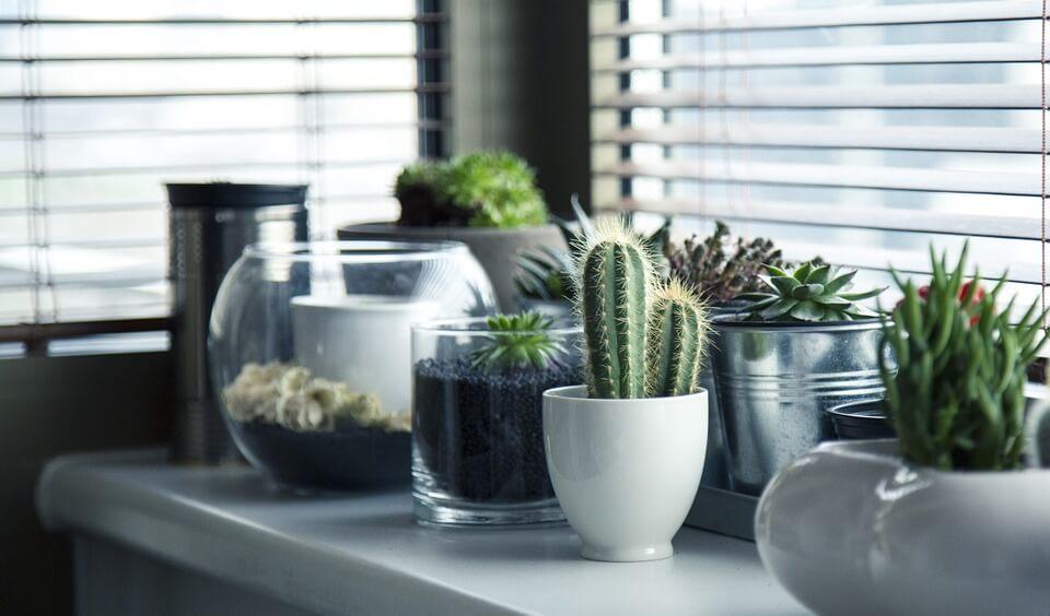 plante succulente en pot