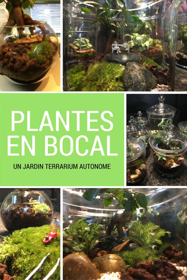 Composition de plantes en bocal ou plantes en terrarium