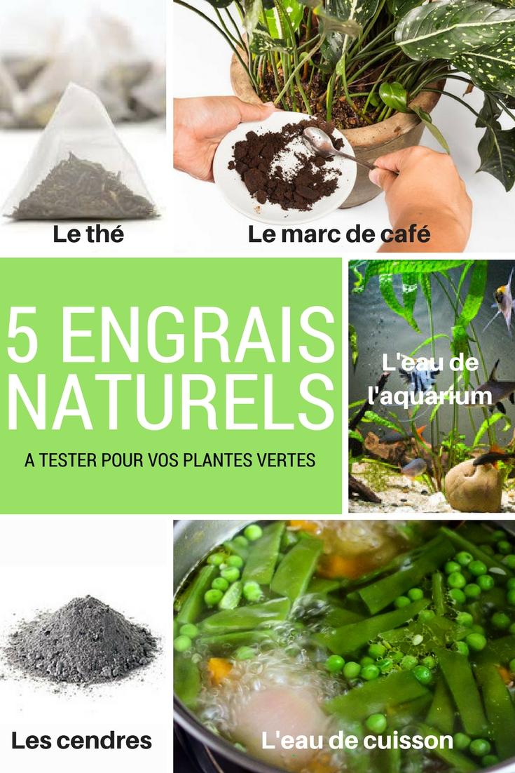 Nos 5 engrais naturels pour des plantes vertes luxuriantes