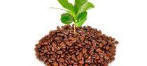5 engrais naturels pour plantes