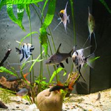 l'eau de l'aquarium